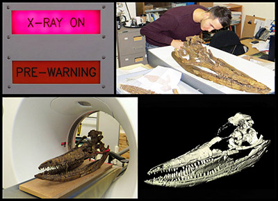Micro CT-scanning a rare, Jurassic-aged 3D ichthyosaur skull at Cambridge University (March, 2015).